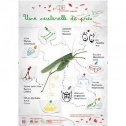 Poster 2 - Une sauterelle des prés
