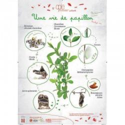 Poster 1 - Une vie de papillon