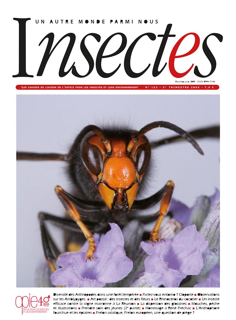 Revue Insectes - Frelon asiatique