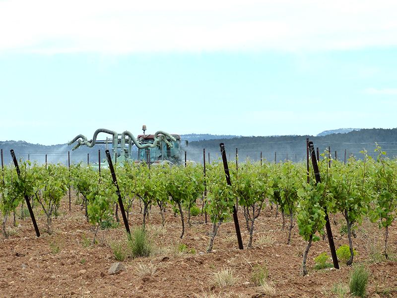 Traitement des vignes