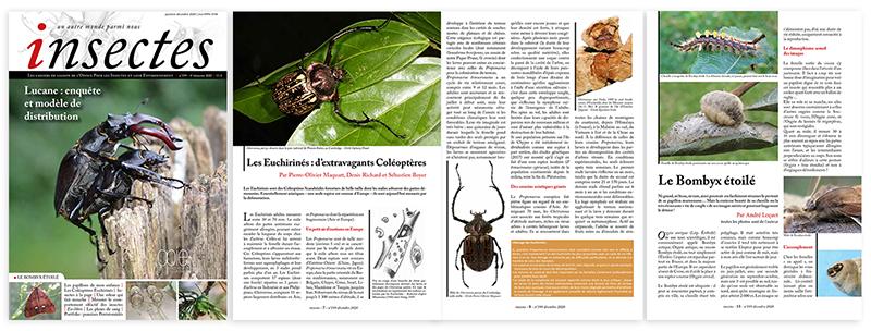 Revue insectes opie